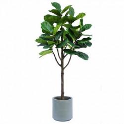 6.5' Fiddle Fig Silk Tree